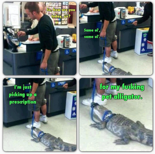 pet alligator