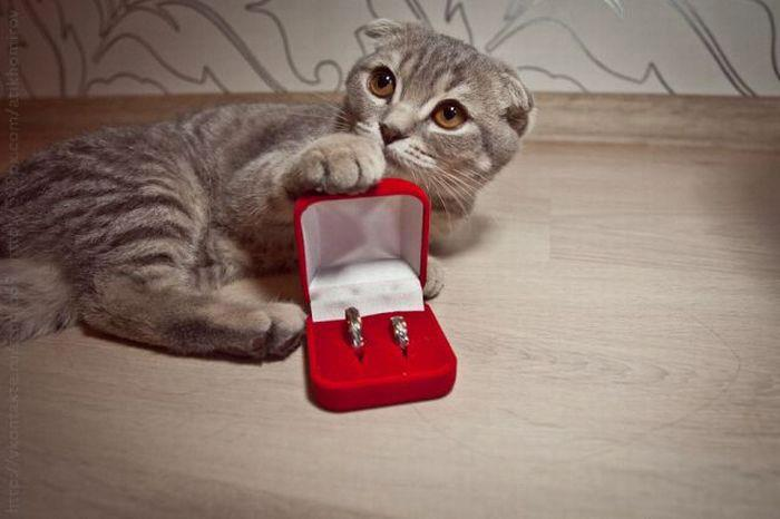 Cat lovers method of proposal