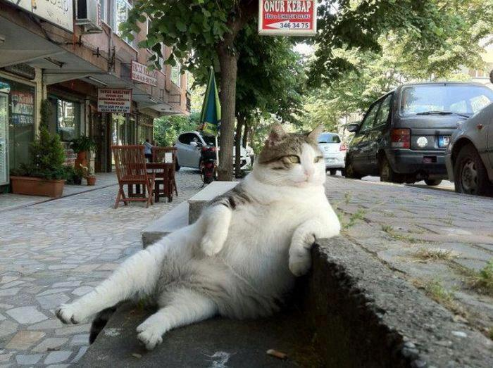 Cat chilling out