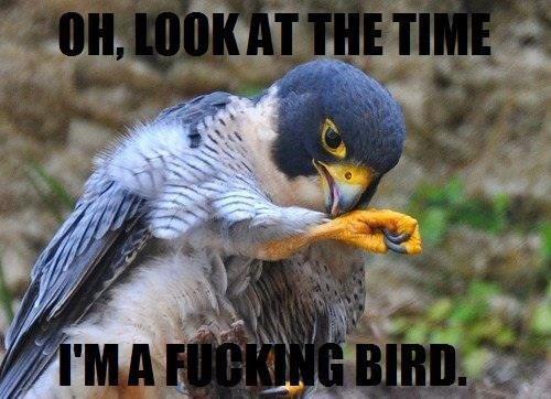 This is definitely a big bird