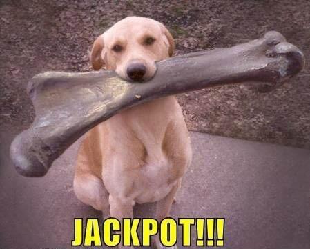 Big bone for Labrador